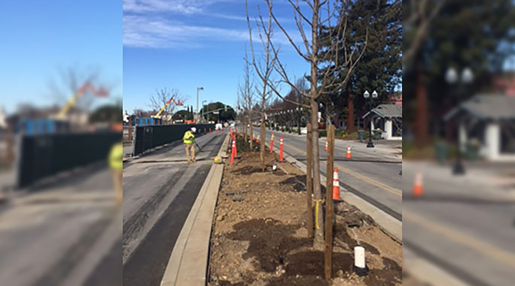 Feb. 2018: Sunnyvale median with trees installed.
